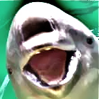 porpoise-mouth-image